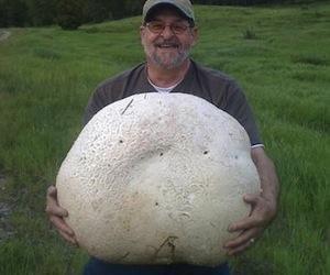 Man lugs home 57-pound mushroom