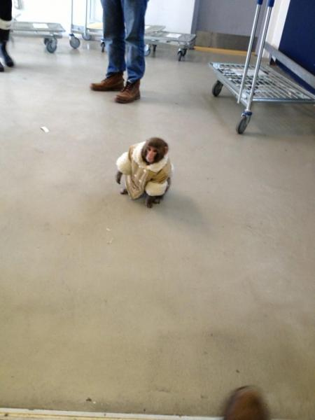 Monkey seized in IKEA parking garage