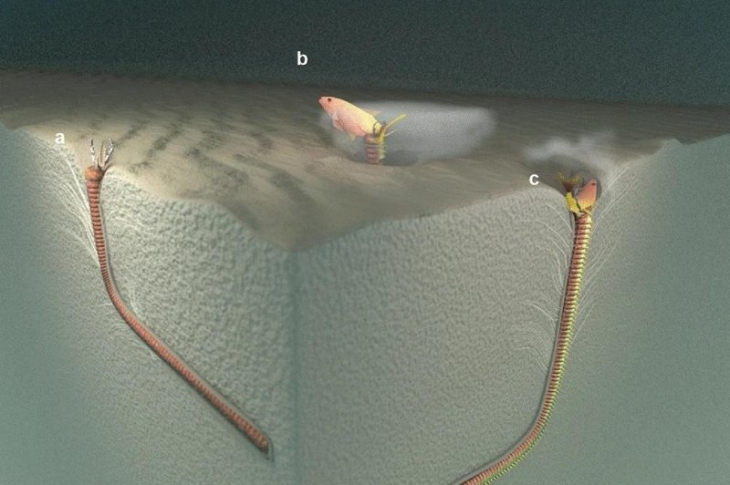 Fossil burrows suggest large worms colonized Eurasian seafloor...