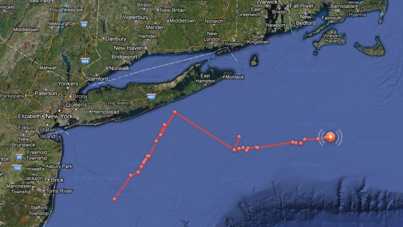 Real Life Jaws Off Hamptons Mary Lee The Great White