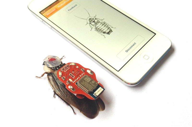Backyard Brains raises funds for RoboRoach cockroach ...