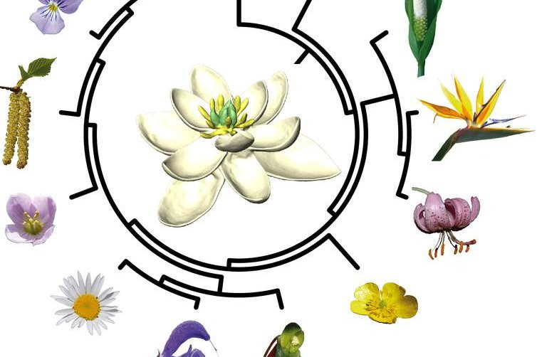First Ever Flower 140 Million Years Ago Looked Like A Magnolia