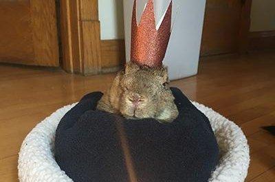 Rabbit breaks Guinness record for world's oldest - UPI com