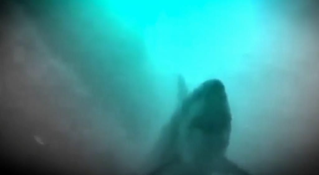 Discovery defends Megalodon mockumentary - UPI com