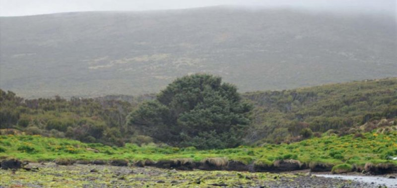 'Loneliest tree in the world' offers evidence of Anthropocene's beginning