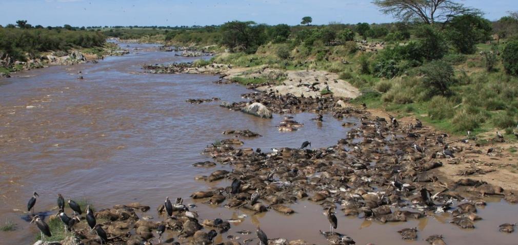 Salas gav river segern