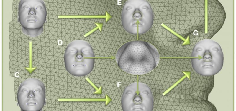 Scientists discover 15 new genes that influence face shape