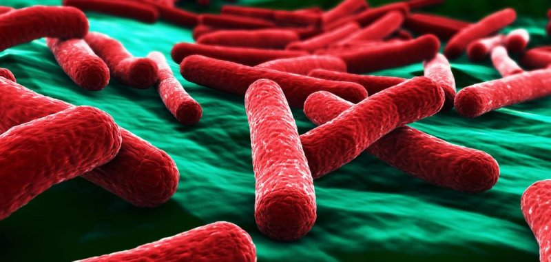 Bacteria resistant to last-resort antibiotic found in Pennsylvania