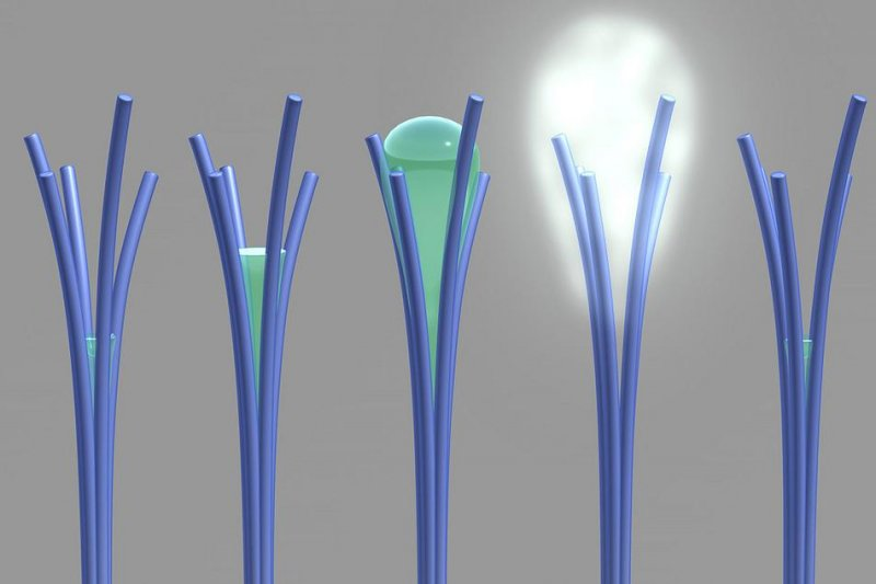 New 'water-oozing' nanorods could be used to harvest H2O