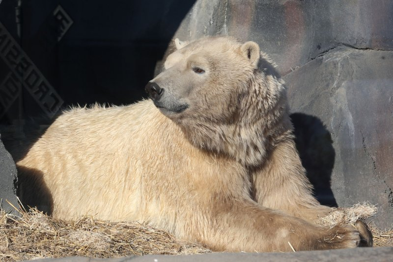 Dog tussles with, chases off polar bear in Alaska
