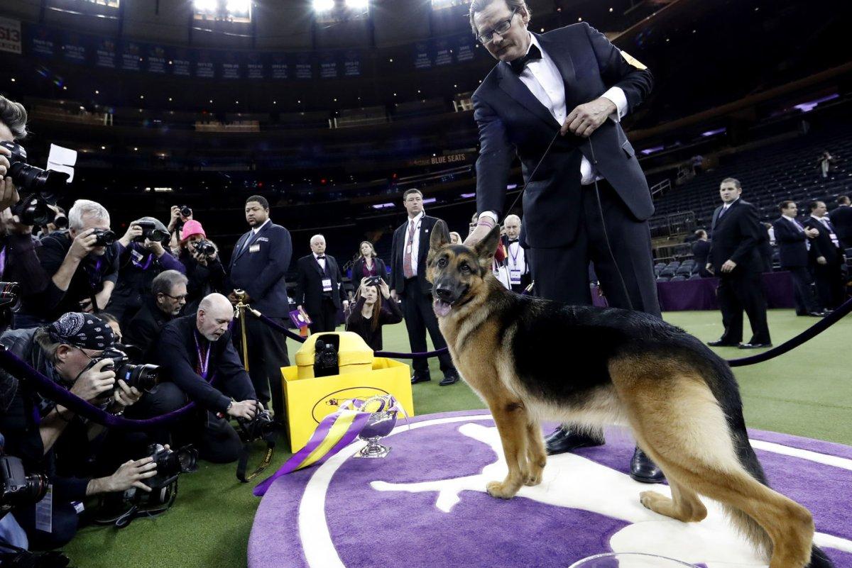 Westminster Dog Show Video Rumor Has It