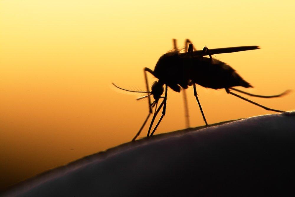 'Super malaria' spreads in South East Asia