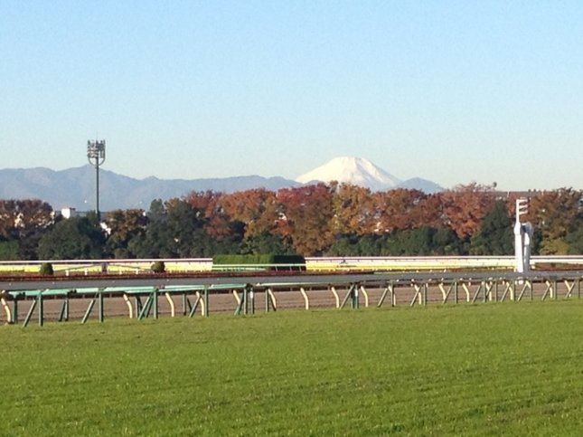 Tokyo Race Course, with Mount Fuji in the background, awaits Sunday's running of the Group 1 Japan Cup. (Photo by Robert Kieckhefer)