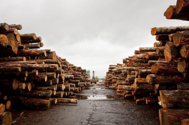Tacoma, Wash.-based Northwest Hardwoods will close two sawmills because of financial strains caused by Chinese tariffs on hardwood exports, the company said. Photo courtesy of Northwest Hardwoods