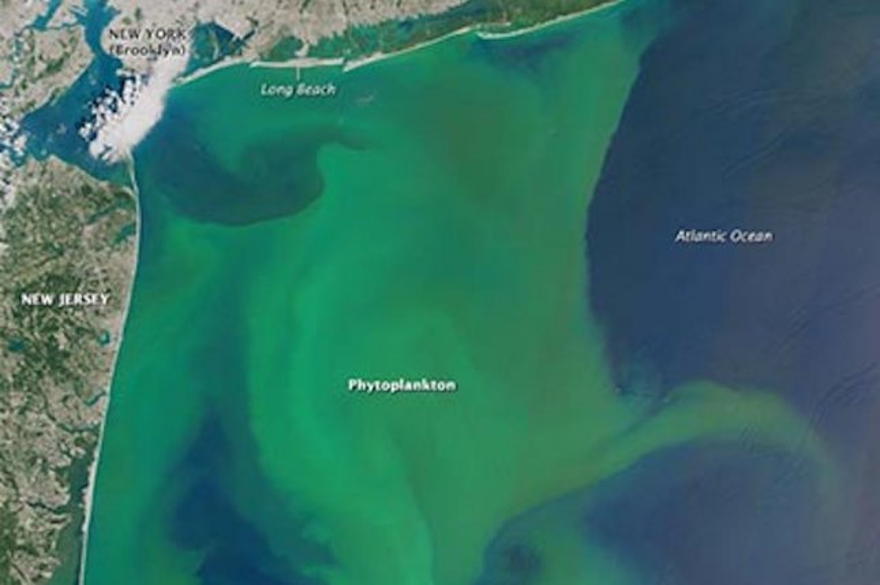 A toxic algae bloom as seen from space. Photo by NASA/Stony Brook University