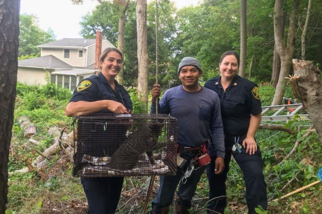 Officials in a New Jersey town enlisted the help of a professional tree climber to rescue a stranded cat more than 50 feet up a tree. Photo courtesy of the Town of Smithtown
