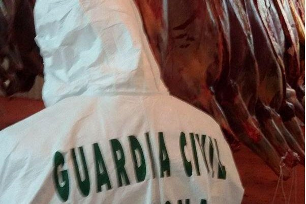 An official for Spain's Guardia Civil inspects a slaughterhouse in Spain. The police, in coordination with Europol, dismantled an organized crime group that was trading horsemeat in Europe unfit for human consumption. Photo courtesy of Europol
