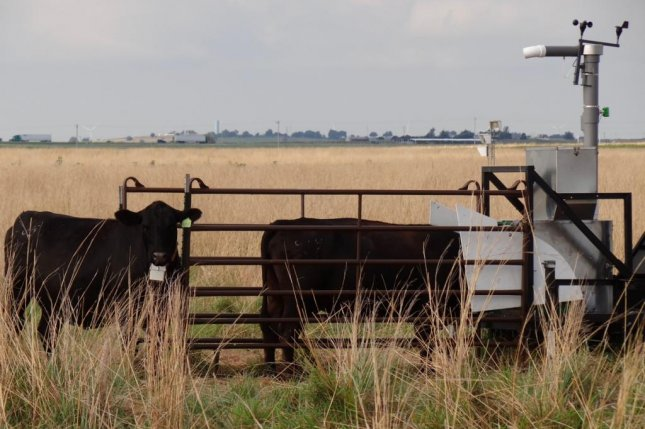 New technology called GreenFeed is helping researchers measure the methane emitted by cattle. Photo by Richard Todd/AGU