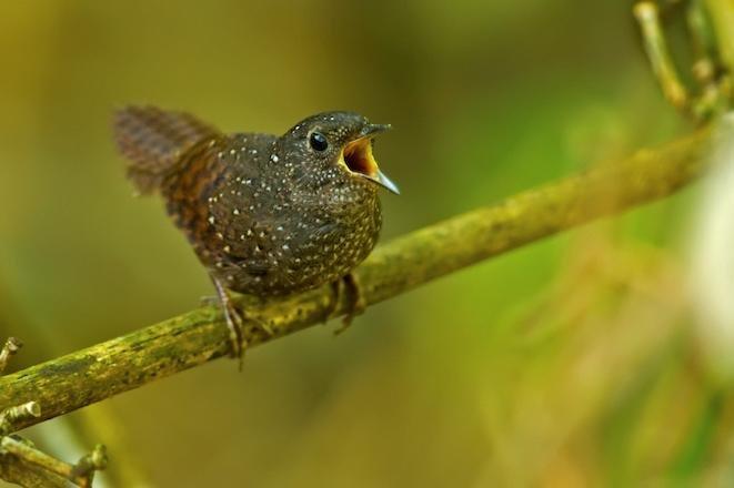 WWF: East Himalaya surveys yield more than 200 new species