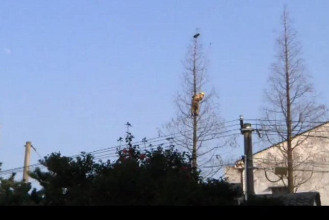 A firefighter climbs a 65-foot tree to rescue a cat stranded at the top. Screenshot: Newsflare