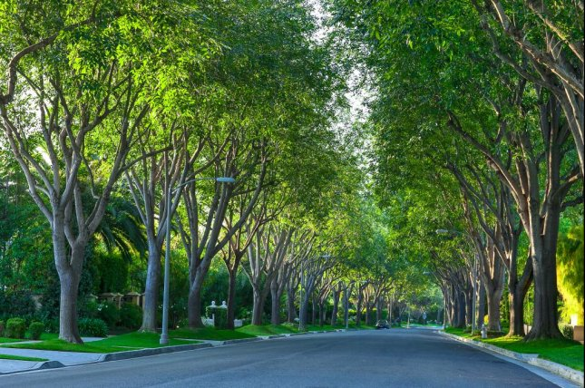 The trees along a street in Beverly Hills, California, provide valuable benefits -- boosting property values and cleaning the air. Photo by Zhukova Valentyna/Shutterstock