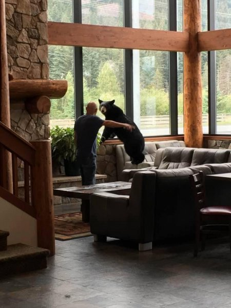 Photos: Bear Fleeing Onlookers Wanders Into Alaska Hotel Lobby ...