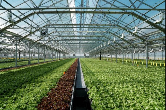 A large greenhouse operated by Brooklyn, N.Y.-based Gotham Greens helped produce food as the coronavirus pandemic cut supply chains in March. Photo courtesy of Gotham Greens