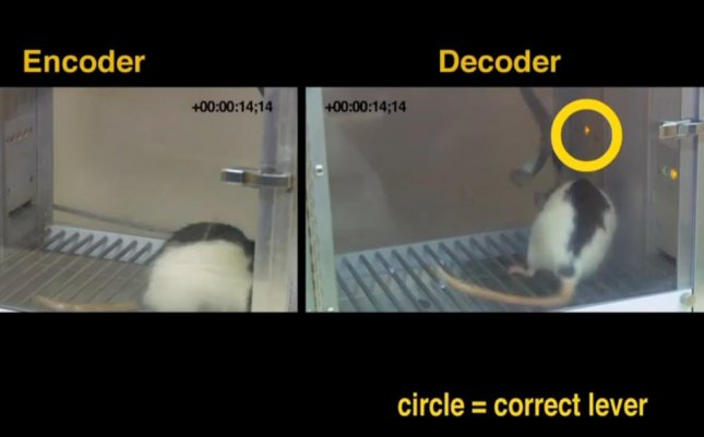 WATCH: Brain implant links two telepathic rats