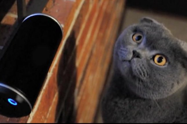 David Teie, an accomplished orchestral cellist, put his theory on music appreciation in mammals into action by launching a Kickstarter campaign to compose an album designed to appeal specifically to cats.  Photo by David Teie/Kickstarter