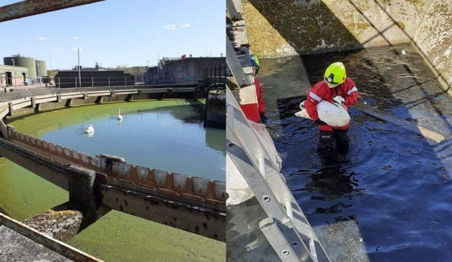The Scottish SPCA and firefighters responded to a sewage treatment plants to rescue three swans trapped in a disused sewage tank. Photo courtesy of the Scottish SPCA