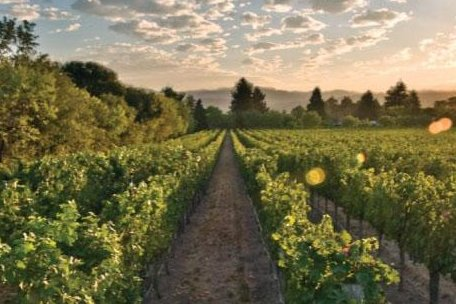 Delicato Family Vineyards photo by Facebook  Russia's consumer rights watchdog group, has banned wines produced in California. The wines banned Monday are produced in California by Delicato Family Vineyards, Geyser Peak Winery and Crane Lake Cellars.