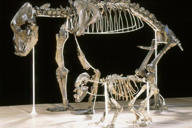 Europe's cave bear was significantly larger than its modern relatives. Photo by RBINS