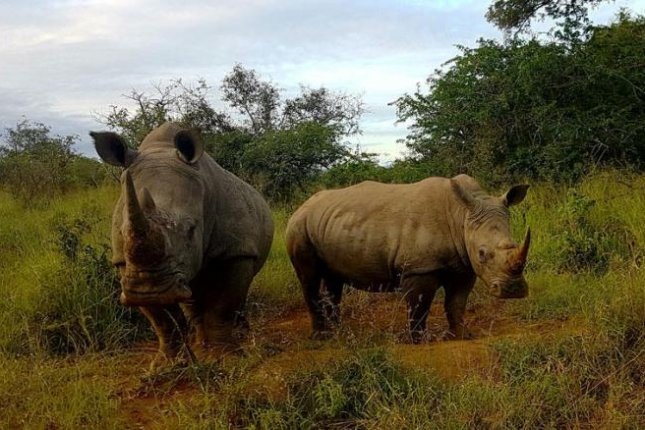 Machine learning to help officials track illegal wildlife