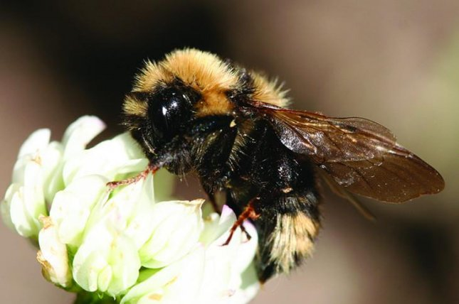 Research shows air pollution diminishes a bees' ability to find flowers. Photo by USDA Forest Service