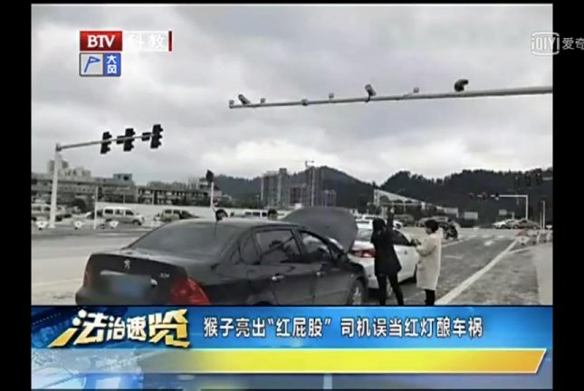 A driver who was rear-ended at a traffic light in China said she slammed on her brakes when she mistook an escaped circus monkey's red buttocks for a stop light. Screenshot: iqiyi.com