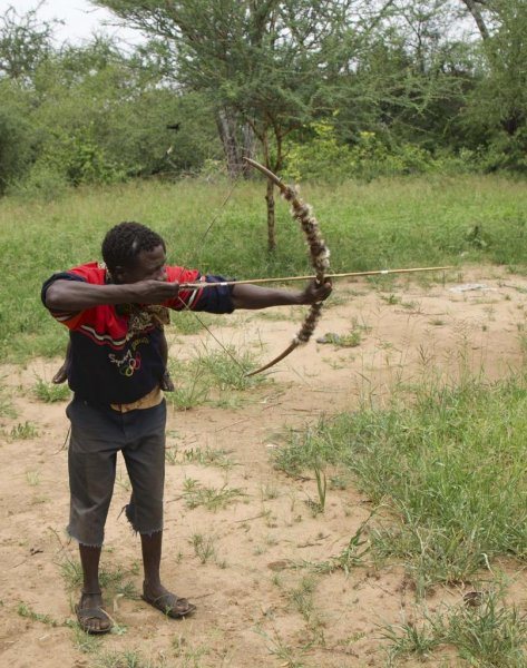 Hadza hunters, like the one pictured, acquire a certain level of expertise at manufacturing bow-and-arrow technology, but their design choices appear to be constrained by cultural norms, researchers say. Photo by Jacob Harris/UCLA