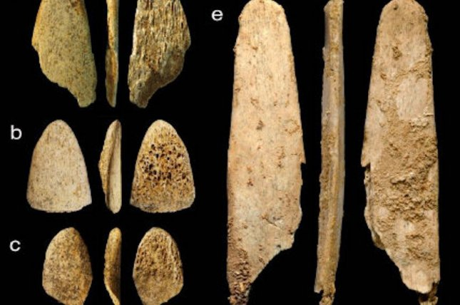 Though the bones of deer were more readily available, Neanderthals preferred to make leather-making tools with the rib bones of bison. Photo by Naomi Martisius/UC Davis