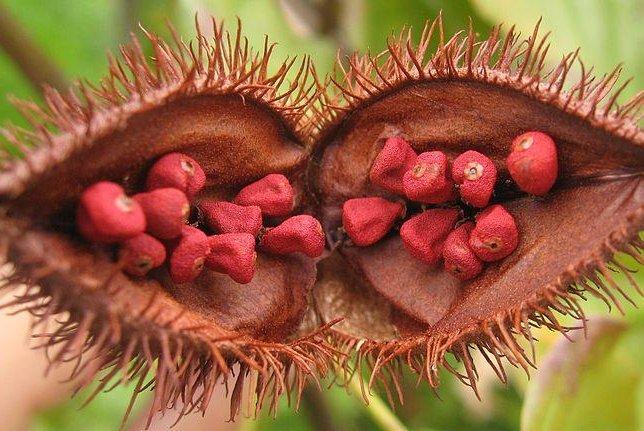 Natural food additive prevents skin cancer in mice - UPI.com