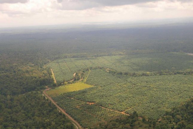 An aerial photos shows the first 38 acres of palm oil plantation that will be turned back into rainforest on the island of Borneo. Photo by Robert Risch