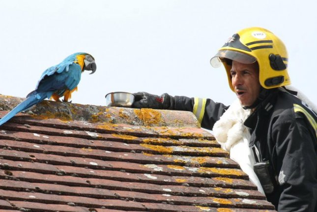 Firefighters in London responded to a neighborhood where a potty-mouthed parrot named Jessie had fled from her owner and perched on a neighbor's roof for three days. Photo courtesy of Paul Wood/London Fire Brigade