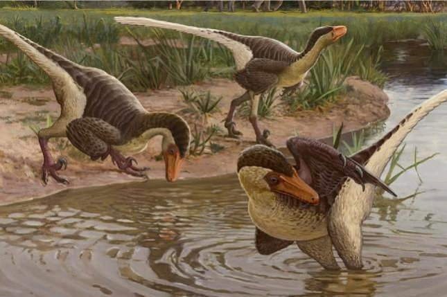 An artistic rendering imagines what a new species of feathered raptor might have looked like. The dinosaurs lived 67 million years ago in what is now New Mexico. Photo by Sergey Krasovskiy
