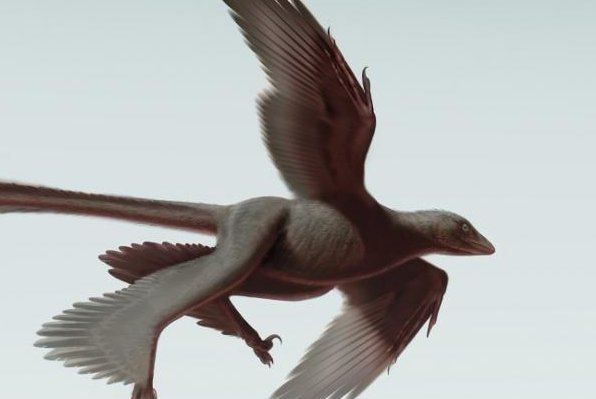 An artistic representation of the Changyuraptor yangi, one of the latest theropods. (Stephanie Abramowicz/Dinosaur Institute NHM)