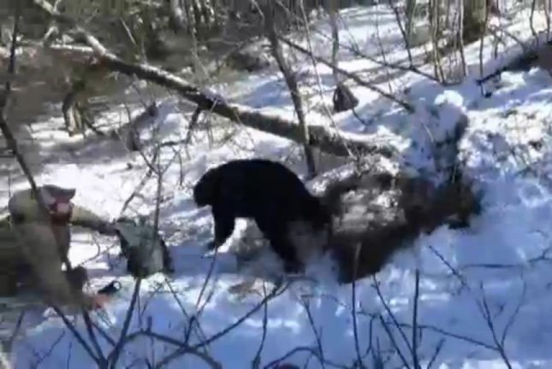 A researcher jumps backward as a bear runs out of its den in Vermont. Screenshot: WCAX-TV