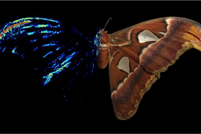 Researchers used acoustic tomography to map the strength of the echoes reflected by different parts of a silk moth's wing. Photo byT. Neil and M. Holderied