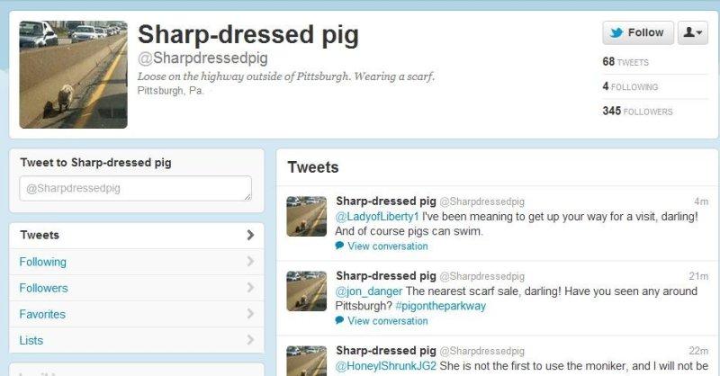 Scarf-wearing pig stuns motorists