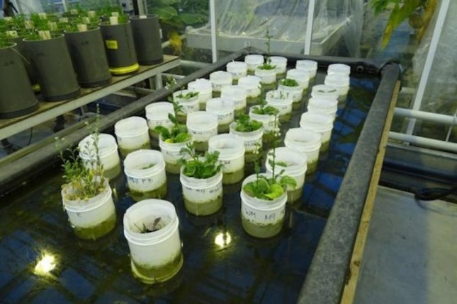 NASA's Mars soil simulant witnesses earthworm reproduction, crop growth