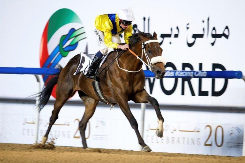 Mubtaahij headed for UAE Derby after winning UAE 2000 Guineas Trial 1/15 at Meydan (Dubai Racing Club photo)