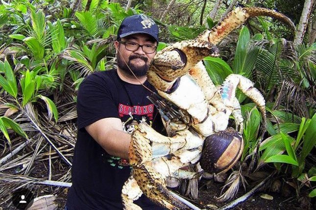 Christmas Island Australia.Look Huge Coconut Crab Caught In Australia Upi Com