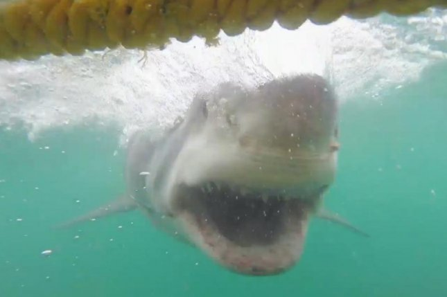 Sharks caught on camera in Australia, South Africa