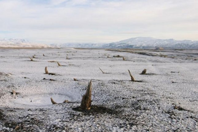 The rings of trees in an ancient preserved forest in Iceland help scientists pinpoint the date of a historic volcanic eruption. Photo by the University of Cambridge
